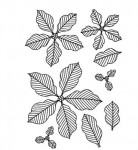 Stempel Pinstriped Poinsettias