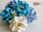 Blue &white small gardenias